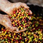 تجربتي مع القهوة الخضراء للتخسيس... الفوائد والآثار جانبية وطرق الاستخدام